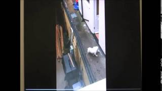 Grimsby Facebook Dog Abuse Video