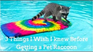 3 Things I Wish I knew Before I Got a Raccoon! thumbnail