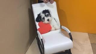 """Обзор кресла-качалки """"Престиж с подножкой"""" белая экокожа + щенок с сердцем"""