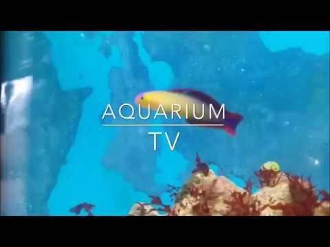 Fische ins Aquarium einsetzen | Ich habe neue Fische!!