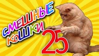 Смешные кошки 25 Приколы с животными 2019 - коты Funny cats vine compilation - Part 25