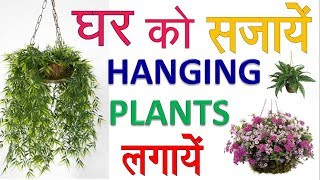 hanging-plants-grow-beautiful-hanging-plants-in-your-home