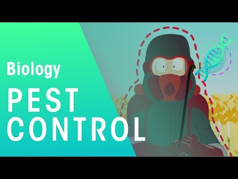 Pest Control |
