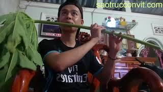 Thanh niên thổi sáo Despacito cực chất bằng lá đu đủ
