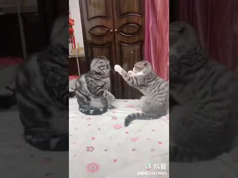 Cat Series: When 2 kittens play together (so cute!!!)