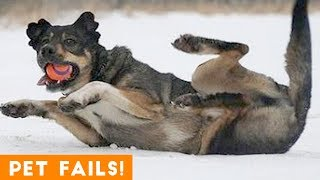 funny animal fails