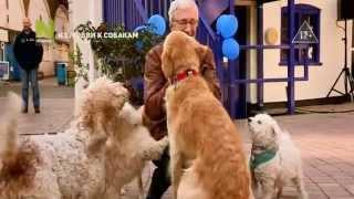 Из любви к собакам - промо программы на Viasat Nature HD