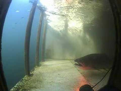 Mirabel Inflatable Dam Fish Ladder