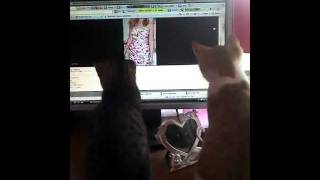 Kittens in a computer mouse trance