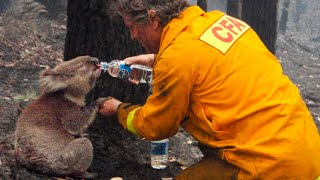 15 Most Touching And Inspiring Animal Rescues