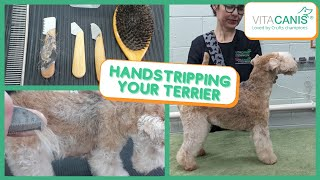 HANDSTRIPPING YOUR TERRIER  IS HANDTRIPPING SUITABLE FOR YOUR DOG?