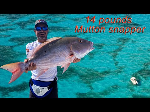 Fishing For Mutton Snapper Yellow Tail I Florida Key Largo