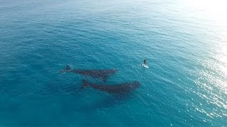 Paddle Boarding with Whales, Esperance Australia(Paddle Boarding with Whales in Esperance, Western Australia. Filmed in 4K. Shot and put together by me. Instagram: https://instagram.com/jaimenhudson For ..., 2015-09-24T10:00:40.000Z)