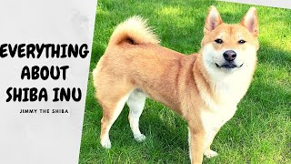 What You Should Know BEFORE Getting a Shiba Inu | Super Shiba
