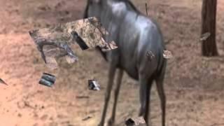 Пьяные животные Африки