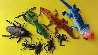 animal kingdom: Insectos de juguetes, mantis,louva deus,iguana, grasshopper scarab bug beetles
