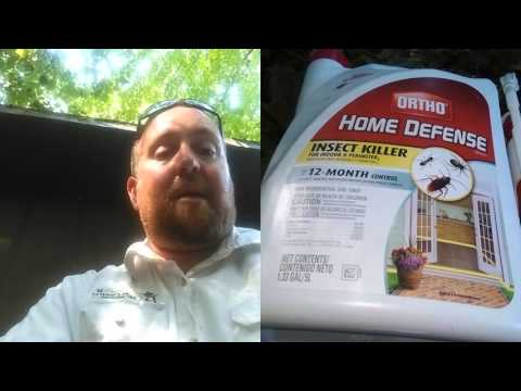 Best Do It Yourself Home Pest Control