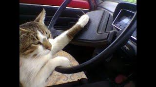 😸 Кошки рулят! 🐈 Подборка смешных котов и  котят для хорошего настроения! 😸