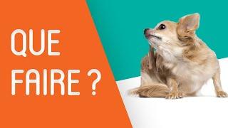 Mon chien se gratte : Que faire ?