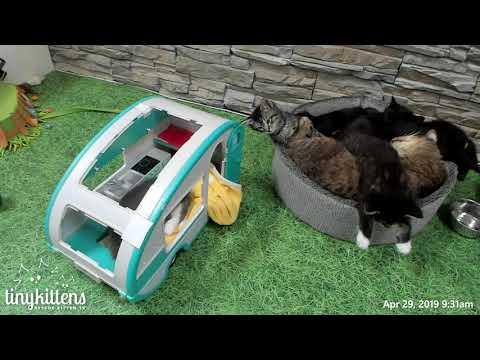 A Grandpa Mason Kitten Melt!  TinyKittens.com