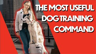 THIS is the MOST useful dog training command (and easy to do)
