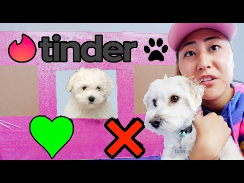 PUPPY TINDER IN REAL LIFE!!