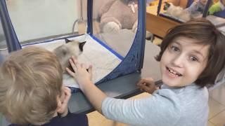 Дитячий реабілітаційний центр ''Добродея'' р. Шахти. Фелинотерапия з кішками породи TOY BOB