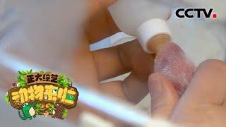 [正大综艺·动物来啦]人工育幼刚出生的幼崽第一口应该喂什么  CCTV