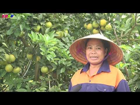 Cam Thái Hòa được thêm vào chỉ dẫn địa lý cam Vinh