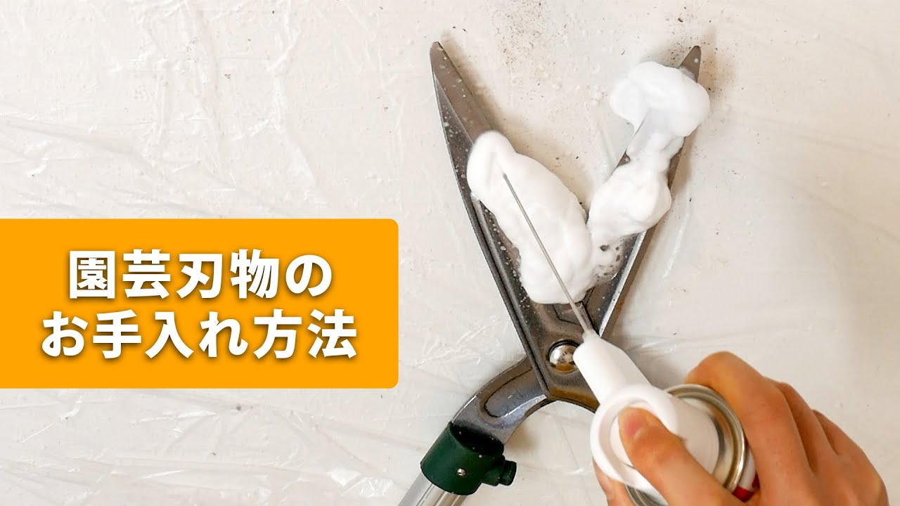 コロナ 渡辺 鳴沢 大工 村