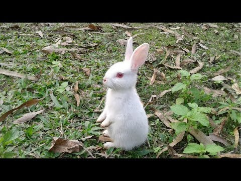 Clever Rabbit Run And Run - Funny Animals