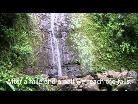 Hike to Manoa Falls, Oahu.wmv