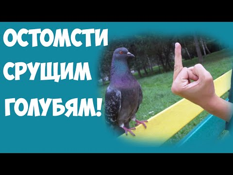 К чему снится птица над головой – если вы наблюдали птицу над головой другого человека, это свидетельствует о том, что среди ваших знакомых или коллег по работе есть личность, которая оказывает на вас плохое влияние.