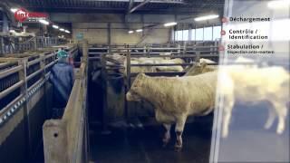 De l'animal à la viande