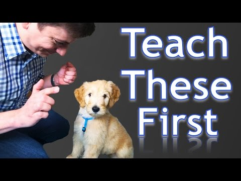 3 Easy Things to Teach your NEW PUPPY!