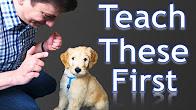 Found Zak George S Dog Training Revolution