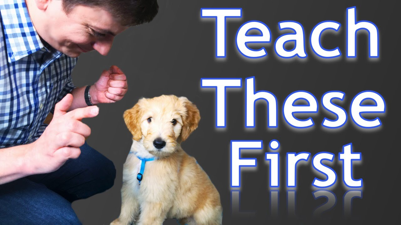 Puppy Training Pdf