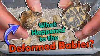 Mystery Turtle Eggs Hatching- Part 2!