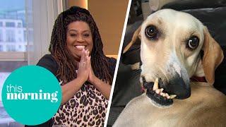 The Wonky Dog Going Viral on TikTok   This Morning