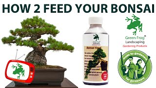 How To Feed Your Bonsai
