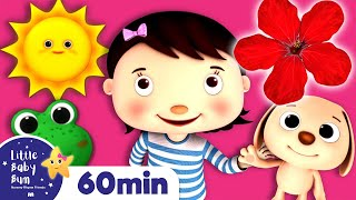 Color Actions Song | Learning Videos for Toddlers | ABC 123 Colors & Shapes | Little Baby Bum