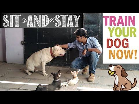 உட்காருவதற்கு உங்கள் நாய் எப்படி பயிற்சி செய்ய வேண்டும் | Dog Training