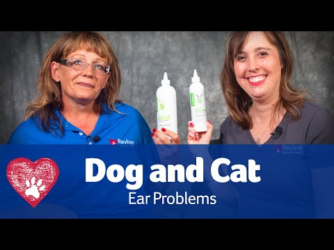 How to Clean Your Dog or Cat's Ears