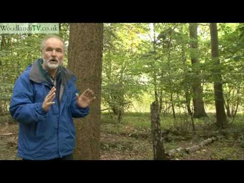 Valuing Trees - what is a tree worth?