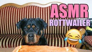 ASMR Dog ROTTWEILER  TEST JEDZENIA