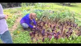WWOOFing Switzerland: A Self-Sufficient Farm near Lake Geneva