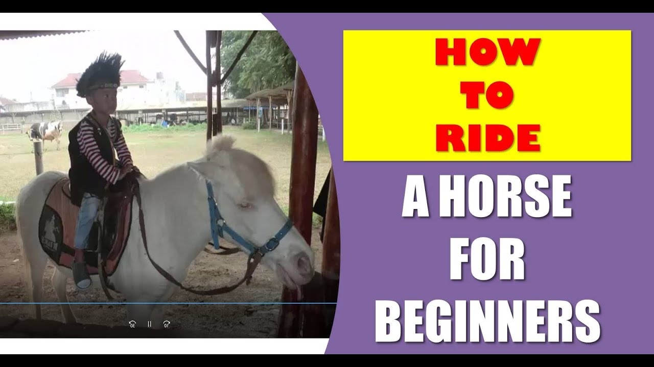 How to ride a horse for beginners - Friendly white horse not dark horse