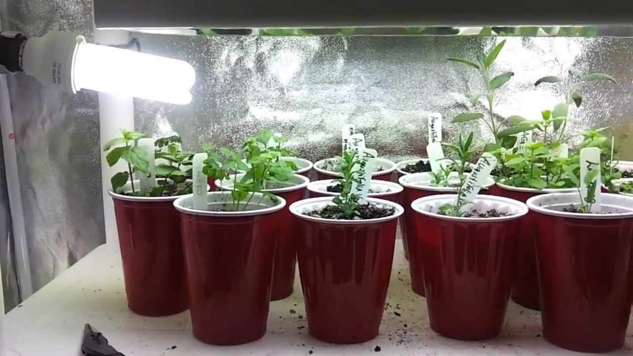 Indoor Kitchen Garden Faucets Lowes Herb Fruit And Vegetable 3 15 13 Youtube