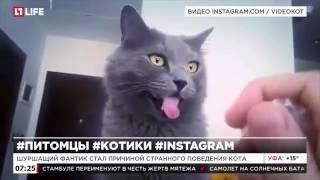 В Instagram набирает популярность видео реакции кота на шуршание