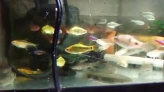 ごった返す熱帯魚 thumbnail
